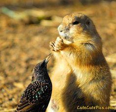 Funny Comedy Pics: Funny Birds