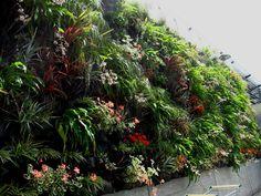 Hanging Garden in Remuera - NZ's largest outdoor vertical garden
