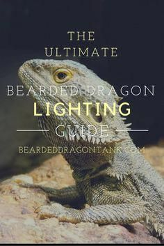 The Ultimate Bearded Dragon Lighting Guide Bearded Dragon Habitat, Bearded Dragon Diet, Bearded Dragon Cage Ideas, Bearded Dragon Funny, Bearded Dragon Lighting, Bartagamen Terrarium, Reptile Terrarium, Terrarium Ideas, Bearded Dragon Terrarium