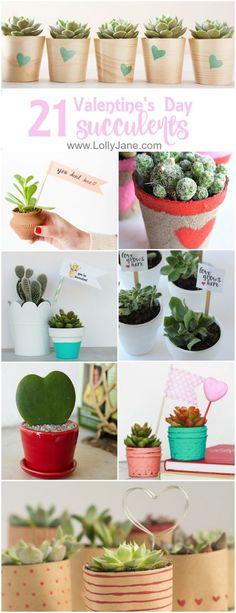 21 Valentines Succulents