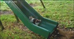 park-gif,funny,lol,cat
