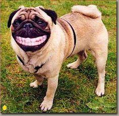 Funny Dog!!! #funnydoghabits #funnydogplaques #funnydogrelatedquotes #funnydogquotesjokes
