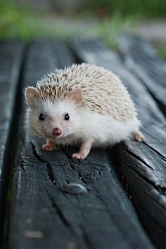 And then I decided, we needed a hedgehog!