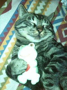 Estado gatuno-Me siento a gusto durmiendo.