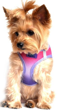 ULTRA CHOKE FREE STEP IN REFLECTIVE DOG HARNESS ? AMERICAN RIVER OMBRE RASPBERRY SUNDAE ? ALL SIZES ** Visit the image link more details.