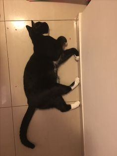 Popatrz Panie... chodzę po ścianie :)
