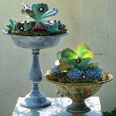 Succulent Container Garden Vintage Appeal