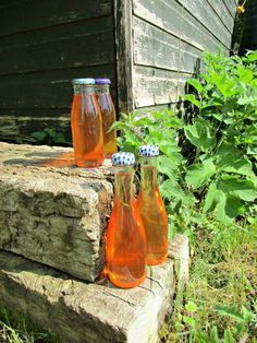 Delicious Stinging Nettle Cordial Recipe - Google the health benefits of stinging nettles, and you will find the most incredible list of diseases and complaints that this plant has been attributed to helping with