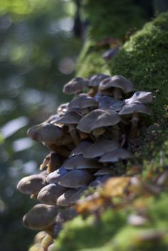 Mushrooms - Autumn