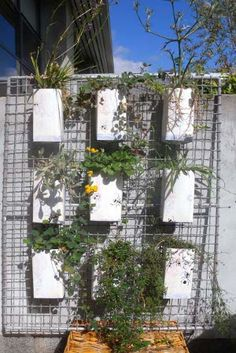 Indigenous vertical garden Algar small.jpg