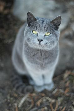"""""""You will always be lucky if you know how to make friends with strange cats."""" --Colonial American Proverb"""