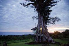 Lupe Sina Treesort, Samoa