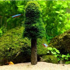 GBP - Aquarium Simulation Moss Christmas Tree Plant Grow For Fish Tank Decoration & Garden Planted Aquarium, Diy Aquarium, Aquarium Fish Tank, Fish Tanks, Live Christmas Trees, Christmas Plants, Xmas Tree, Hydroponic Gardening, Hydroponics