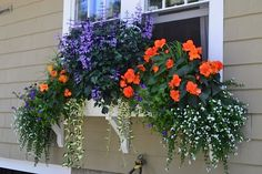 Summer on Flora St.- Yes, it's true, I actually live on Flora St. This year's boxes are filled with Apricot Nonstop Begonias, Diamond Frost Euphorbia, Summer Wave Large violets, 'Flashlights' Milium, white bacopa, vinca major and my showstopper, Plectranthus 'Velvet Elvis'. What a great year!