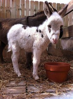Baby animals have the power to melt all hearts, even those made of steel. But while everyone enjoys seeing a palm-sized fox or deer, people rarely take their Cute Funny Animals, Cute Baby Animals, Animals And Pets, Cute Dogs, Wild Animals, Baby Donkey, Cute Donkey, Baby Horses, Baby Cows