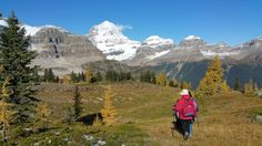 A breathtaking guided hiking trip to Mount Assiniboine in the Canadian Rockies with helicopter fly-in. Book your adventure with us! Canadian Rockies, Hiking, Canada, Marvel, Adventure, Mountains, Day, Nature, Walks