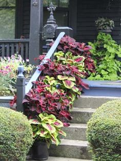 TAKE YOUR YARD TO A NEW LEVEL BY LANDSCAPING WITH POTTED PLANTS