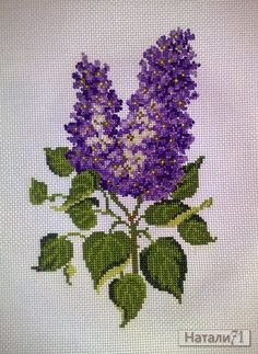 Lilac Gallery.ru / delikanlı, Fransızca knot - Benim işlemeli. - Natali71