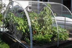 Chicken Wire - Garden Fence Material Protects Your Plants