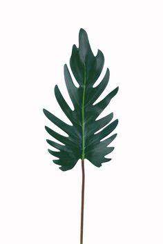 xanadu leaf - Buscar con Google