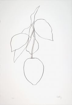 Ellsworth Kelly vegetal drawings are one of my favorite things in the world .