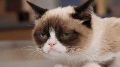 grumpy_cat_g_mp_64011