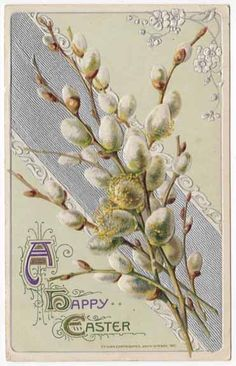 Vintage Easter Pussy Willows Postcard, ca. 1910s