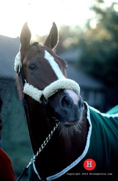 Get to know amazing race mare Genuine Risk