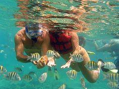 Isla Catalina Snorkeling www.colonialtours.com.do