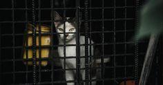 Des milliers de chats abattus pour être vendus comme viande de lapin aux boucheries et restaurants  :'( sniff :'( sniff BOURREAU :'( ASSASSIN :'( SAUVAGE :'( CONNARD :'( POURRI :'( DEBILE :'( sniff :'( sniff  AMORE  EXAMPLE n°1 :ENCORE DES VIETS DE MERDE QUI FOND BOUFER DES CHATS DANS LES RESTAURENT POUR DU FRICS JE TE METRAIS LE FRIC DANS LA BOUCHE POUR T ETOUFEZ CONNAD CREUVURE  EXAMPLE n°2 :c'est une belle pouriture il mérite la corde aucou  EXAMPLE n°3 :En Chine, dans ces coins de pays…