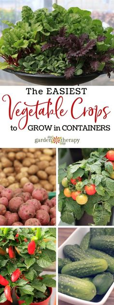 These five prolific edibles yield a ton of food when grown in a container, so if you only have a small space or no garden at all, plant these veggies in pot this year. As you harvest and cut them back, they will produce more and more vegetables. Source by Growing Vegetables In Containers, Easy Vegetables To Grow, Container Gardening Vegetables, Fruits And Veggies, Grow Potatoes In Containers, Garden Container, Large Containers, Succulent Containers, Gardens