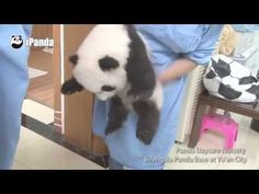 TOP 10 CUTEST BABY PANDA VIDEOS - YouTube