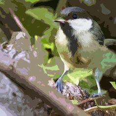 Birds 20 paint  (c)(h) by Olao-Olavia / Okaio Créations fz 1000