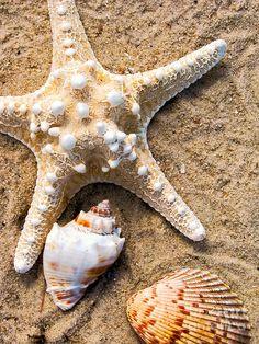 shells - Google Search