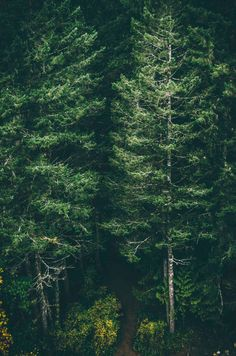 Green forest trees iphone 6 plus wallpaper background