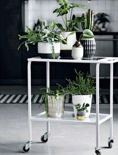 Galleri: Guide: 10 tips til at bo med planter   Femina