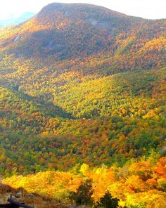 A little farther out from the 'hood, but a piece of my heart belongs to Highlands, NC!  (sigh)