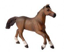 Anglo-Arab Mare - Papo