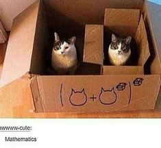 15 Cats Who Are Great At Math
