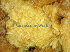 Cork under the microscope at 100x. http://www.microscopeworld.com/default.aspx