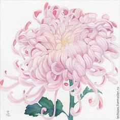 Pink Chrysanthemum. Traditional art ( watercolor). Prof. paper: Canson 300 g/м2 (cotton). Svetlana Markina (LechuzaS) Size: 17cm*17cm