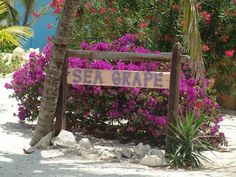 5BR-Sea Grape | Grand Cayman Villas