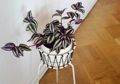 Kirppisrakkautta Flower Pots, Flowers, Organization, Home Decor, Flower Vases, Getting Organized, Plant Pots, Organisation, Decoration Home