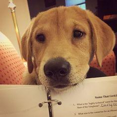 Watcha' reading?