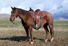 Red Roan Ranch Gelding for Sale - For more information click on the image or see ad # 40096 on www.RanchWorldAds.com