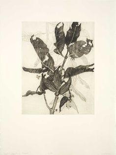Milkweed, Katie Degroot