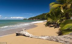 A slice of paradise: La Perle beach at Deshaies is invitingly dreamy, guadeloupe
