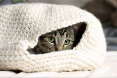 A happy cat is one that has a safe, warm place to hide and dream the day away. The average cat enjoys between 12–16 hours of sleep ...