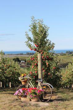 The Dream Maker New Zealand Destination Weddings- Apple Orchard Weddings & Styling www.thedreammaker.co.nz