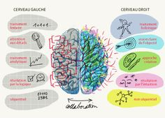 Collaboration entre le cerveau gauche et droit
